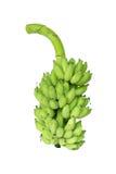 Bananowa wiązka wciąż zielenieje Fotografia Royalty Free