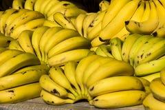 bananowe tło owoc odizolowywali biel Zdjęcie Royalty Free
