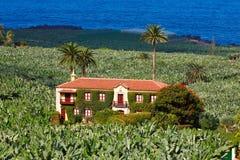bananowej farmy stara plantacja Fotografia Royalty Free