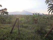 Bananowi drzewa w Uganda, Afryka Zdjęcia Stock
