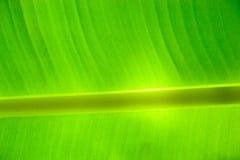 bananowi liść Zdjęcia Stock