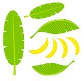 Bananowi liście royalty ilustracja