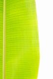 Bananowi liście Obrazy Stock