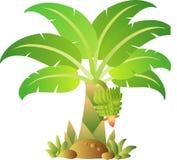 Bananowy drzewo 2 Obraz Royalty Free