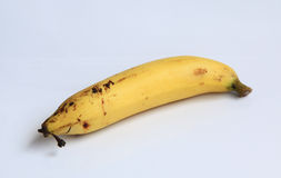 Bananowy kolor żółty na białym tle Fotografia Stock