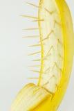 bananowy kręgosłup Fotografia Stock