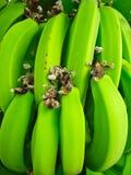 bananowy krzak fotografia royalty free