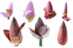 Bananowy kwiatu set Obraz Stock