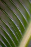 bananowy liść Obrazy Stock
