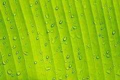 Bananowy liść z wodnymi kroplami Fotografia Stock