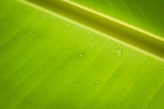 Bananowy liścia tło Fotografia Stock