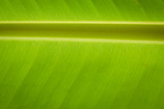 Bananowy liścia tło Zdjęcie Royalty Free