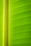 Bananowy liścia tło Fotografia Royalty Free