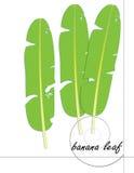 Bananowy liścia tło Obrazy Stock