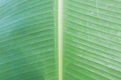 Bananowy liścia tło Obrazy Royalty Free