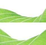Bananowy liścia wzór zdjęcie royalty free