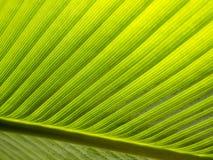 Bananowy liścia wzór Obrazy Royalty Free
