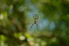 Bananowy pająk Zdjęcia Stock