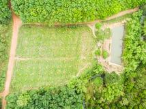 Bananowych drzew sad i gumowych drzew plantacja Zdjęcie Royalty Free