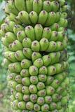 Bananskog royaltyfri fotografi