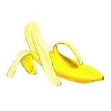 Bananvattenfärgillustration Royaltyfri Fotografi