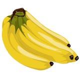 banany Ilustracja Wektor