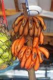 banany czerwoni Obrazy Stock