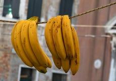 Banany na sznurku w Wenecja Zdjęcia Stock
