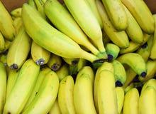 Banany, udziały świezi i dojrzali żółci banany Obraz Royalty Free