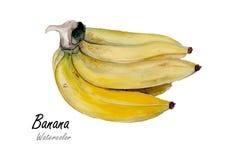 Banany Wręczają patroszonego akwarela obraz na białym tle Zdjęcia Stock