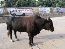 Banaras- de stad van weduwe, stieren, stappen en kluizenaars Royalty-vrije Stock Afbeelding