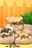Banatek adra, owies adra i słonecznikowi ziarna w sukiennych workach, Fotografia Stock