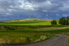Banatka, wiatr i Wildflowers, Fotografia Royalty Free