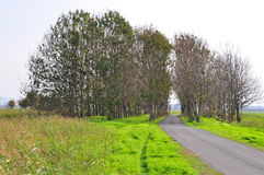 banatrees Fotografering för Bildbyråer