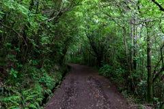 Banatrought skogen längs levadaen Arkivbild