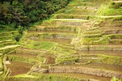 Banaue Stock Photo