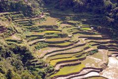 Banaue Royalty Free Stock Image