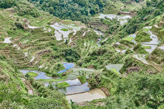 Banaue batad rice paddy terrace fields Stock Photo