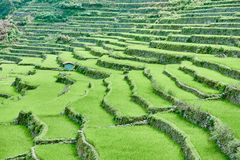Banaue batad rice paddy terrace fields Stock Photography