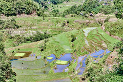Banaue batad rice paddy terrace fields Royalty Free Stock Photography