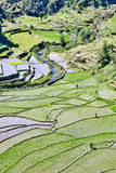 Banaue batad rice paddy terrace fields Stock Photos