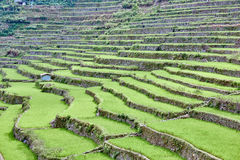 Banaue batad rice paddy terrace fields Royalty Free Stock Image