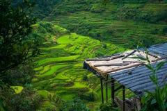 Banaue-Reis-Terrassen-Baustelle stockfotos