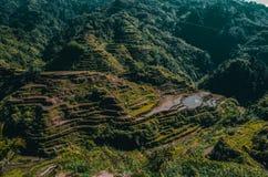 Banaue-Reisterrassen der Philippinen stockbild