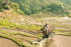 Banaue Rice Terraces - Batad Village Stock Photography