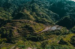 Banaue Rice Terraces of the Philippines stock image