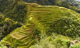 Banaue terraces Stock Photos
