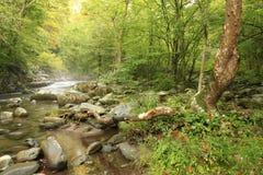Banc à dossier de brouillard sur la rivière dans grand Smokey Mountains National P Photo libre de droits