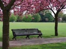 Banc avec les arbres fleurissants roses Photo stock