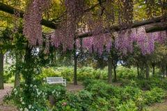 Banc blanc dans le jardin enchanté avec la glycine Images libres de droits